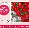 サントリーの洋菊シリーズ 3種類の花苗を100名様にプレゼント!