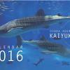 海遊館オリジナルカレンダー 2016を100名様にプレゼント!
